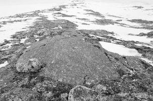 Las plantas enanas Tundra
