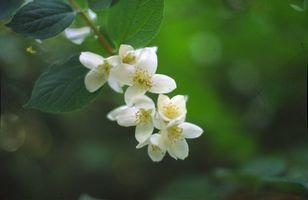 Las plantas tropicales resistentes al frío