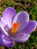 Las flores perennes que florecen durante todo el año