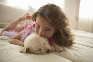 Es Cordyline Fruticosa venenoso para los perros?