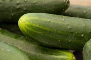 ¿Cuánto tiempo Produce Do pepino Plantas?