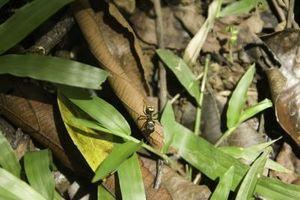 Lo que funciona para librarse de las hormigas?