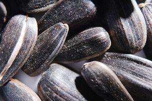 Cómo hacer que las semillas de girasol de sabores