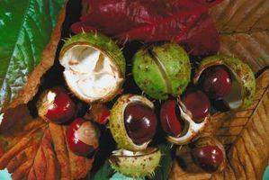 Las plantas que contienen saponinas