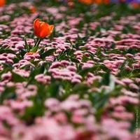 Tipos de Flores en Australia