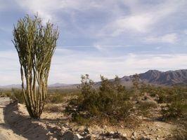 Los arbustos del paisaje del desierto