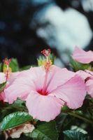 Las flores tropicales, árboles y vides de la planta