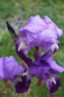 Tipos de flores para plantar en el norte de Michigan