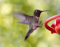 Cómo construir un pedestal Hummingbird baño del pájaro