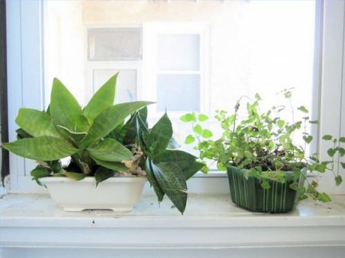Agua embotellada vs. El agua del grifo de las plantas