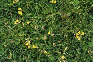 Las plantas resistentes Cubierta vegetal