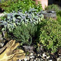 Las mejores hierbas que crecen en jardines