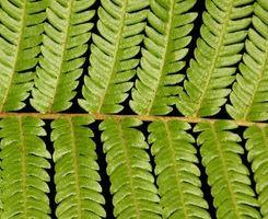 ¿Cuáles son los efectos del plomo y arsénico en la vida vegetal?