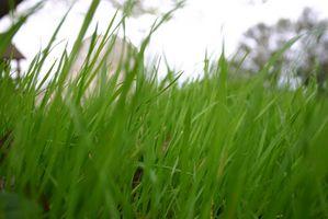 Cómo aplicar fertilizante del césped y de la cal en el mismo tiempo
