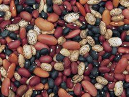 Información en la que suelo crece mejor Pinto Beans