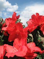 Arbustos y plantas que florecen desde la primavera al otoño