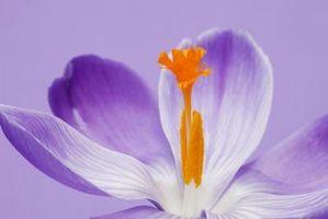 Tipos de flores que pueden ser polinizadas por insectos