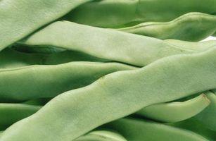 Lo fertilizantes son necesarios para las plantas de frijol?