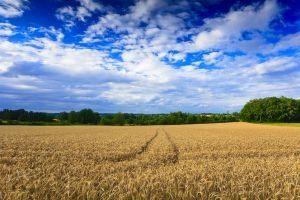 Definición de sucesión ecológica