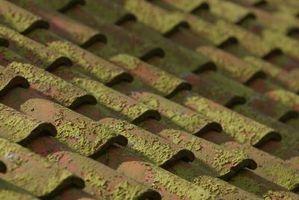 Cuáles son las causas de musgo en el techo?