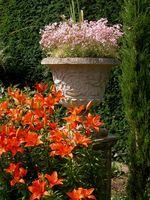 Cómo plantar flores en un jardín de contenedores