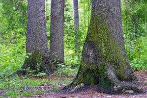 ¿Qué tipo de musgo crece en el lado norte del árbol?