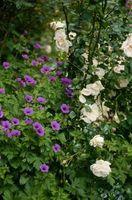 Flores que van bien con las rosas
