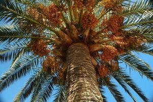 Cómo cubrir una sombrilla de patio con Hojas de la palmera