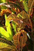 Las luces fluorescentes será hacer que las plantas crecen?