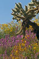 Lista de las flores del desierto