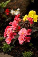 Lista de los diferentes tipos de flores