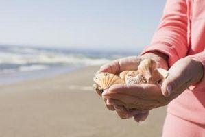 Cómo hacer los ornamentos del pelo con conchas de mar