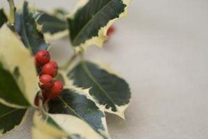 Las plantas resistentes para la jardinería en macetas