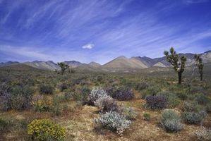 Características del suelo de los desiertos