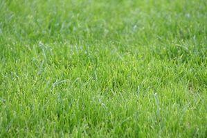 ¿Cuanto tiempo hasta que vea el crecimiento de la hierba sembrado?