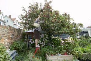 Cómo cultivar un jardín elevado