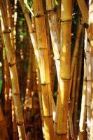 Bambú es la termita prueba?