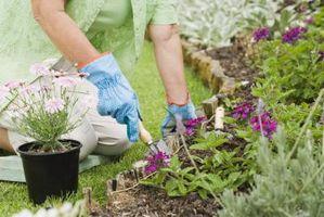 La sal de Epsom para controlar las plagas de jardín vegetal