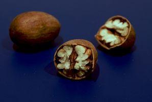 Que es el mejor fertilizante para los árboles de pacana?