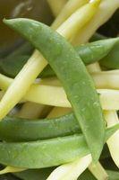 ¿Cómo hacer crecer amarillo habichuelas a partir de semillas