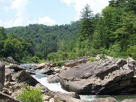 ¿Qué tipo de árboles de cedro crece en el este de Tennessee?