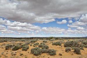Las plantas altas del desierto