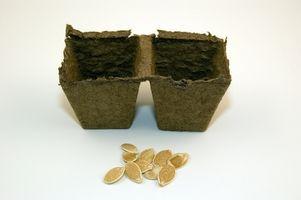 Ciclo de vida de una planta desde la semilla a la Germinación