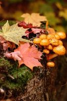 ¿Necesita luz para cultivar hongos?