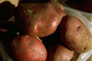 Cómo cultivar patatas rojo de una Spud