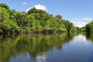 Las plantas que viven en las aguas de los ríos Amazonas