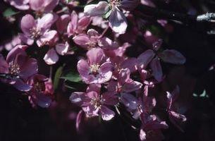 Tipos de floración de la hoja de Crabapple