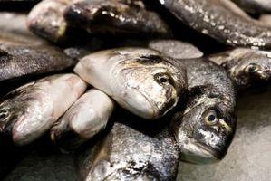 Cómo plantar pescado fresco Atrapados como fertilizante