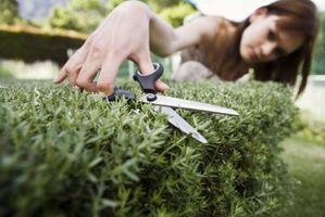 Cómo mover arbustos en el otoño