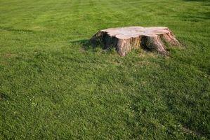 Cómo quitar tocones de árboles Usando alta nitrógeno de fertilizantes